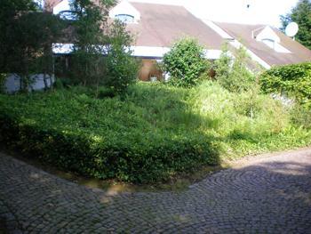 Abattage lagage d 39 arbre namur yves couvreur for Realisation paysagiste jardin